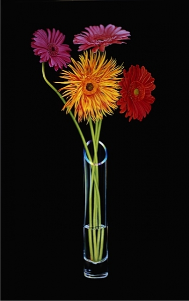 gerbera-daisies-in-a-cylindrical-vase