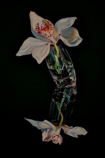 orchid-tilt
