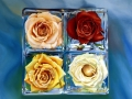 rose-paltter